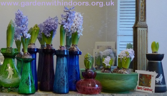 Davidson bulb bowl and other hyacinth vases